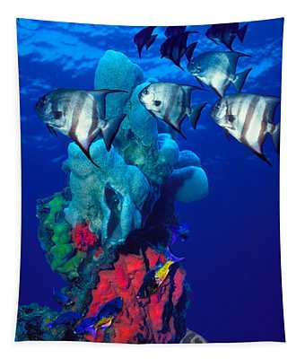 Spadefishes With Nassau Grouper Tapestry