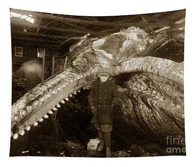 Sperm Whale Taken At Moss Landing California  On January 22 1919 Tapestry