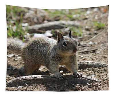 Squirrel Play  Tapestry