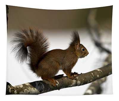 Squirrel Profile Tapestry