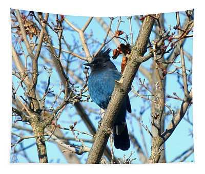Steller's Jay In Winter Tapestry