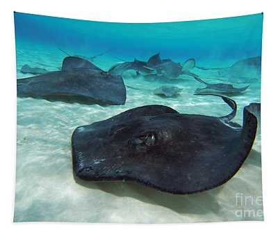 Stingrays Tapestry