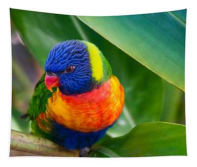 Striking Rainbow Lorakeet Tapestry