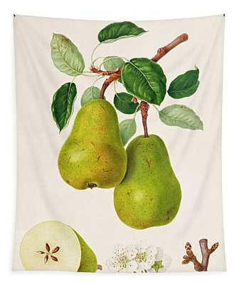 The D'auch Pear Tapestry