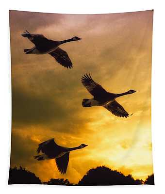 Bird Migration Photographs Wall Tapestries