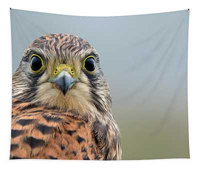 The Kestrel Face To Face Tapestry