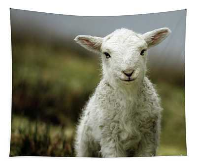 Sheep Tapestries