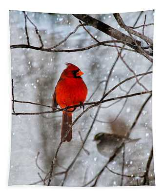 Blue Eyes In The Snow Cardinal  Tapestry