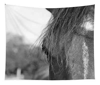 Thoroughbred B/w Tapestry