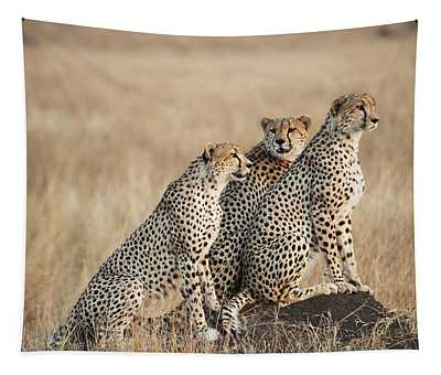 Three Cheetahs Standing Together With A Tapestry
