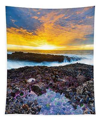 Tidepool Tapestry