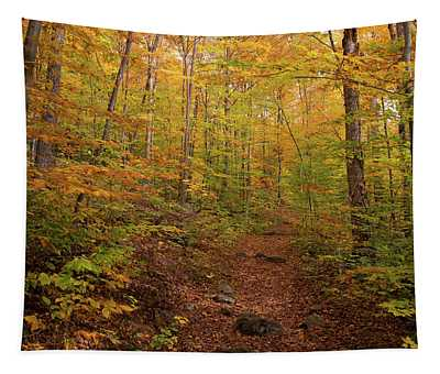 Trail In A Forest, Goodnow Mountain Tapestry