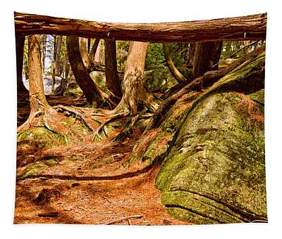 Trail In A Forest, Muskoka, Ontario Tapestry