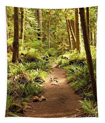 Trail Through The Rainforest Tapestry