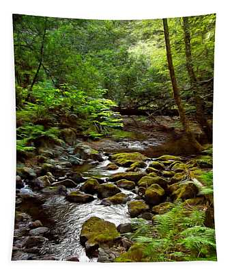 Muir Woods National Monument Photographs Wall Tapestries