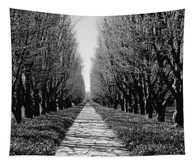 Trees Along A Walkway In A Botanical Tapestry
