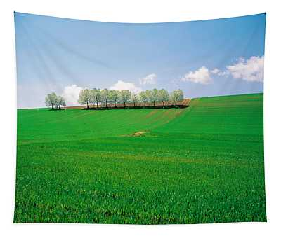 Trees Lined In Crop Field With Sky Tapestry
