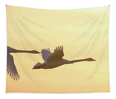 Trumpeter Swans In Flight At Sunset Tapestry