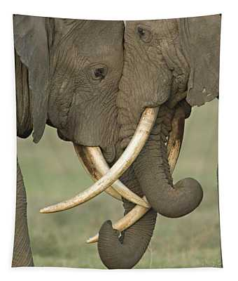 Two African Elephants Fighting Tapestry