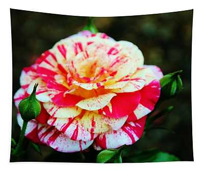 Two Colored Rose Tapestry