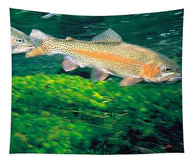 Two Fishes Swimming Underwater Tapestry