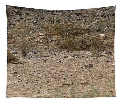 Two Male Lions Panthera Leo Resting Tapestry