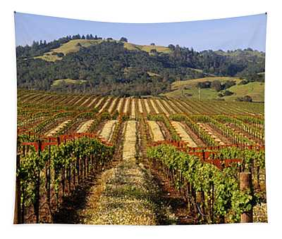 Vineyard, Geyserville, California, Usa Tapestry