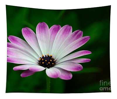 Violet And White Flower Petals With Yellow Stamens Blossoms  Tapestry