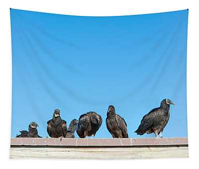 Vultures On Anhinga Trail, Everglades Tapestry