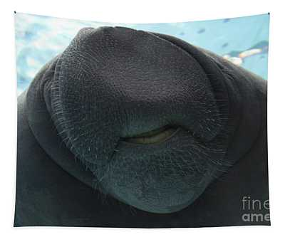 West Indian Manatee Smile Tapestry