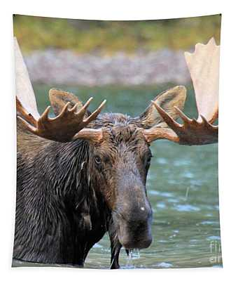 Wet And Hungry Tapestry
