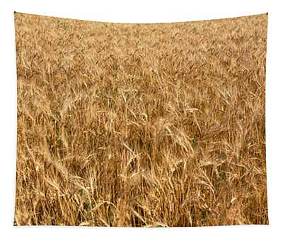 Wheat Crop In A Field, Otter Tail Tapestry