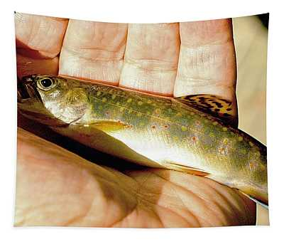 Wild Brook Trout Juvenile Caught On Caddis Fly Imitation Tapestry