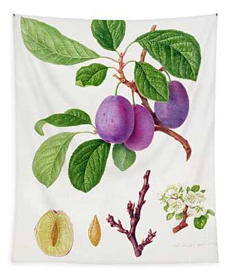 Wilmot's Early Violet Plum Tapestry