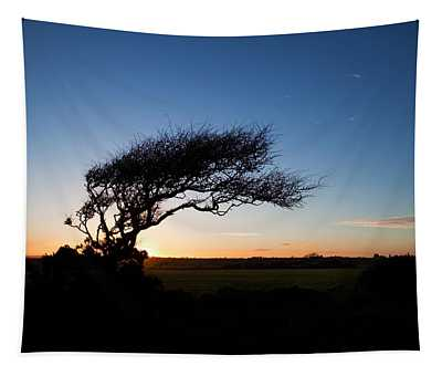 Wind Sculptured Hawthorn Tree, The Tapestry