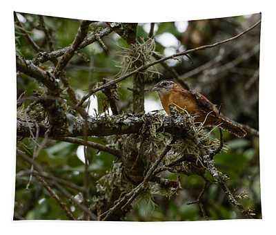 Wren Tapestry