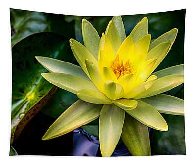 Yellow Water Lily Tapestry