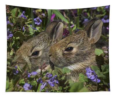Young Eastern Cottontail Rabbits Tapestry