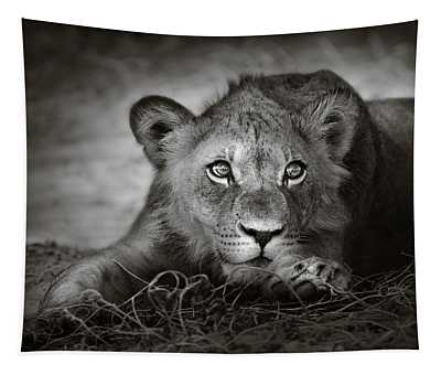 Young Lion Portrait Tapestry