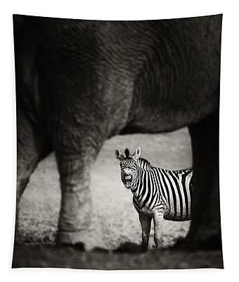 Zebra Barking Tapestry