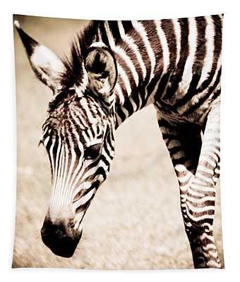 Zebra Foal Sepia Tones Tapestry