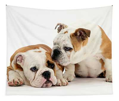 Designs Similar to Bulldog Pups by Jane Burton