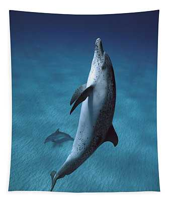 Tapestry featuring the photograph Atlantic Spotted Dolphin  by Hiroya Minakuchi