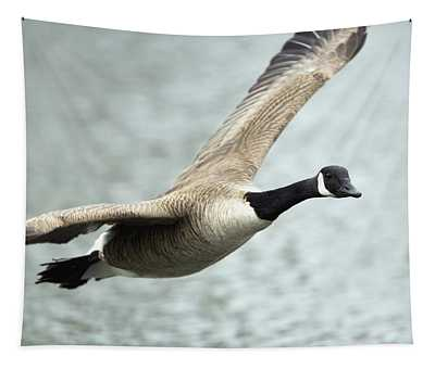 Canada Goose In Flight, Montreal Tapestry