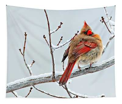 Cardinal I The Snow  Tapestry