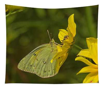 Clouded Sulphur Butterfly Din099 Tapestry