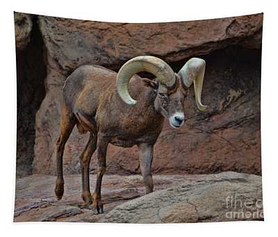 Desert Bighorn Sheep Ram I Tapestry