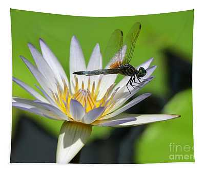 Designs Similar to Dragonfly And The Water Lily