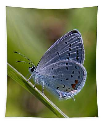 Eastern Tailed-blue Butterfly Din045 Tapestry