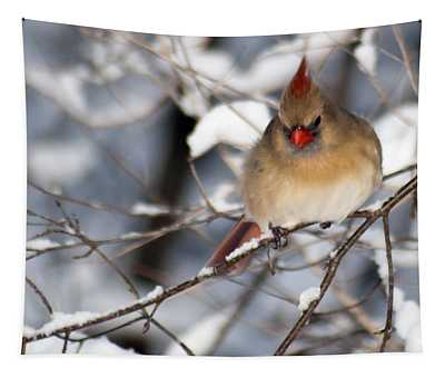 Female Northern Cardinal 4300 Tapestry